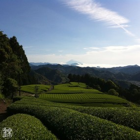 Three years fermented Bancha powder tea