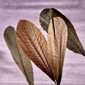 Dried Magnolia leaves Flowers & leaves