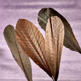 Feuilles de Magnolia séchées Fleurs & feuilles