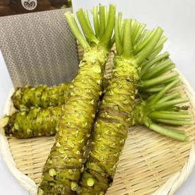 Fresh Premium Wasabi from Azumino (Nagano) XL