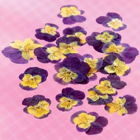 Fleurs de pensées séchées