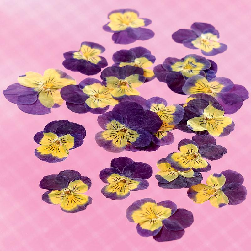 Dried edible viola flowers Flowers & leaves