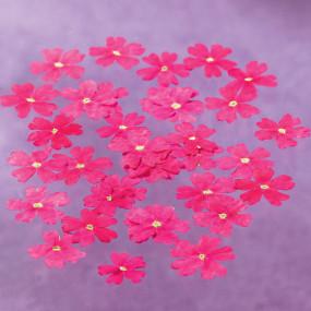 Fleurs de verveine séchées Fleurs & feuilles