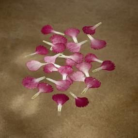 Pétales d'oeillets rouges séchés Fleurs & feuilles
