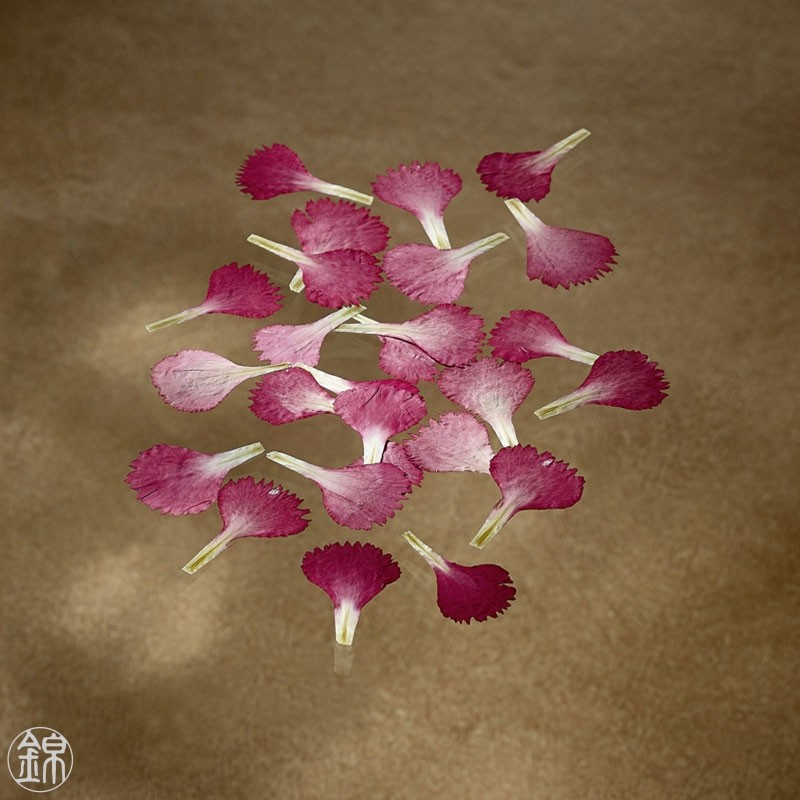 Dried edible red carnation petals