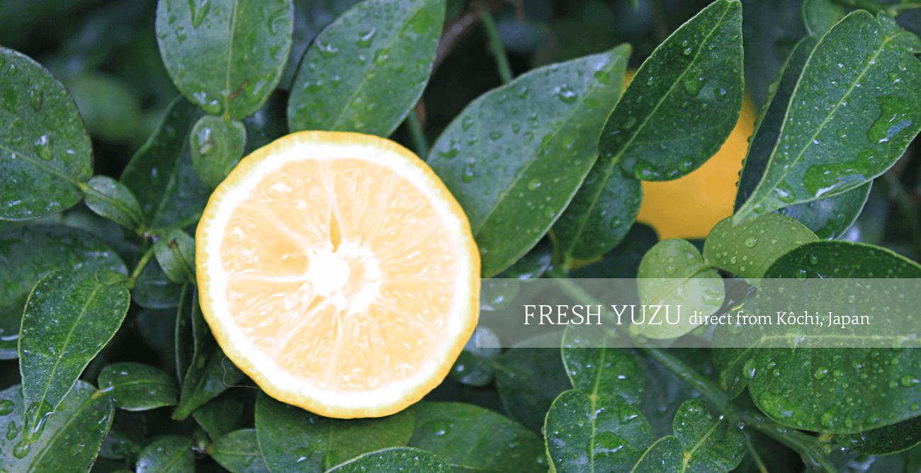 Fresh Yuzu - Coming soon